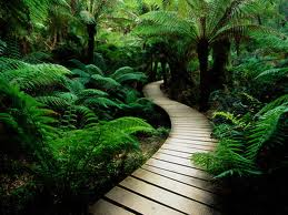 There Is A Certain Poetry To A Path And One Should Be Incorporated Into  Every Garden, Regardless Of Size.